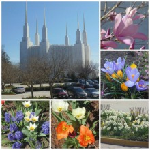 temple-flowers-collage (1)